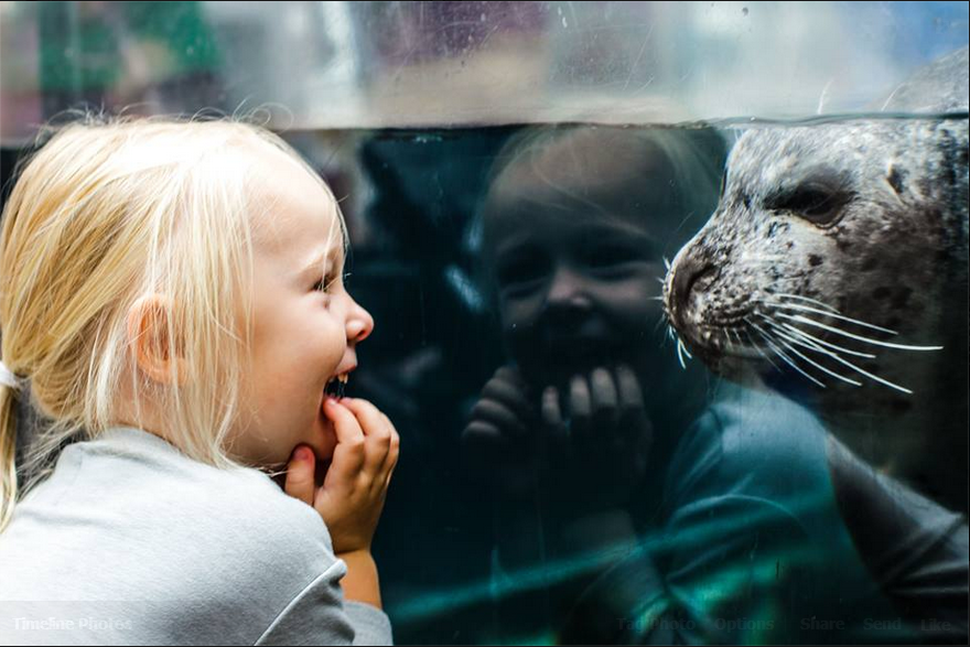 girl laughs at the site of a seal