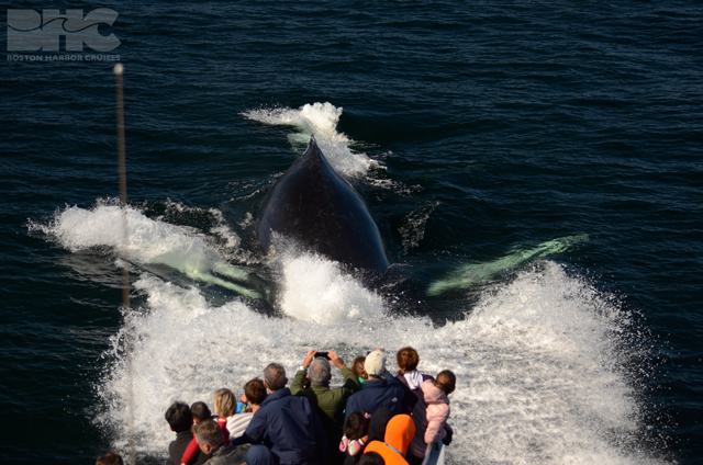 humpback whale and whale watch passengers