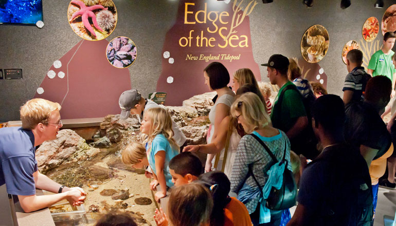 VIsitors gathered around Edge of the Sea exhibit