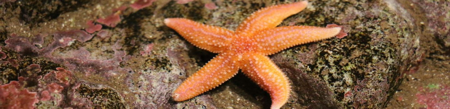 sea star in tidepool touch tank