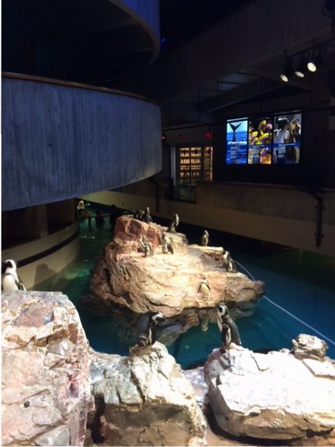 penguin exhibit in empty aquarium