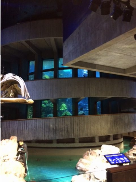 view of giant ocean tank in empty aquarium