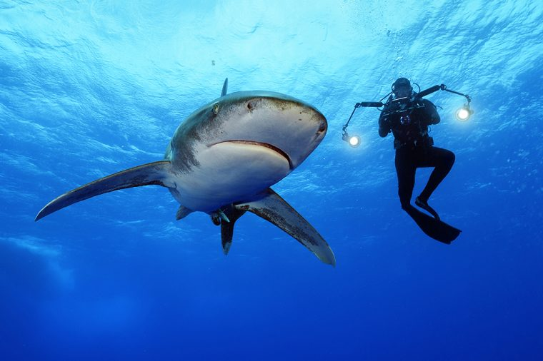 Brian Skerry image of a shark and photographer