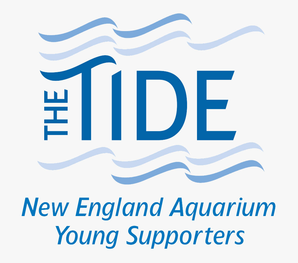 the tide logo