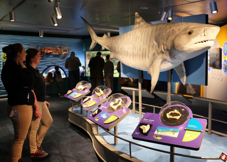 educators look at model shark in Science of Sharks exhibit