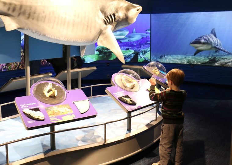 kid explores teeth display in new Science of Sharks exhibit