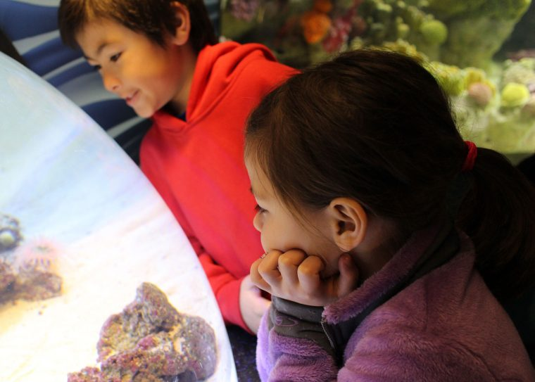 young visitors check out baby shark domed exjhibit
