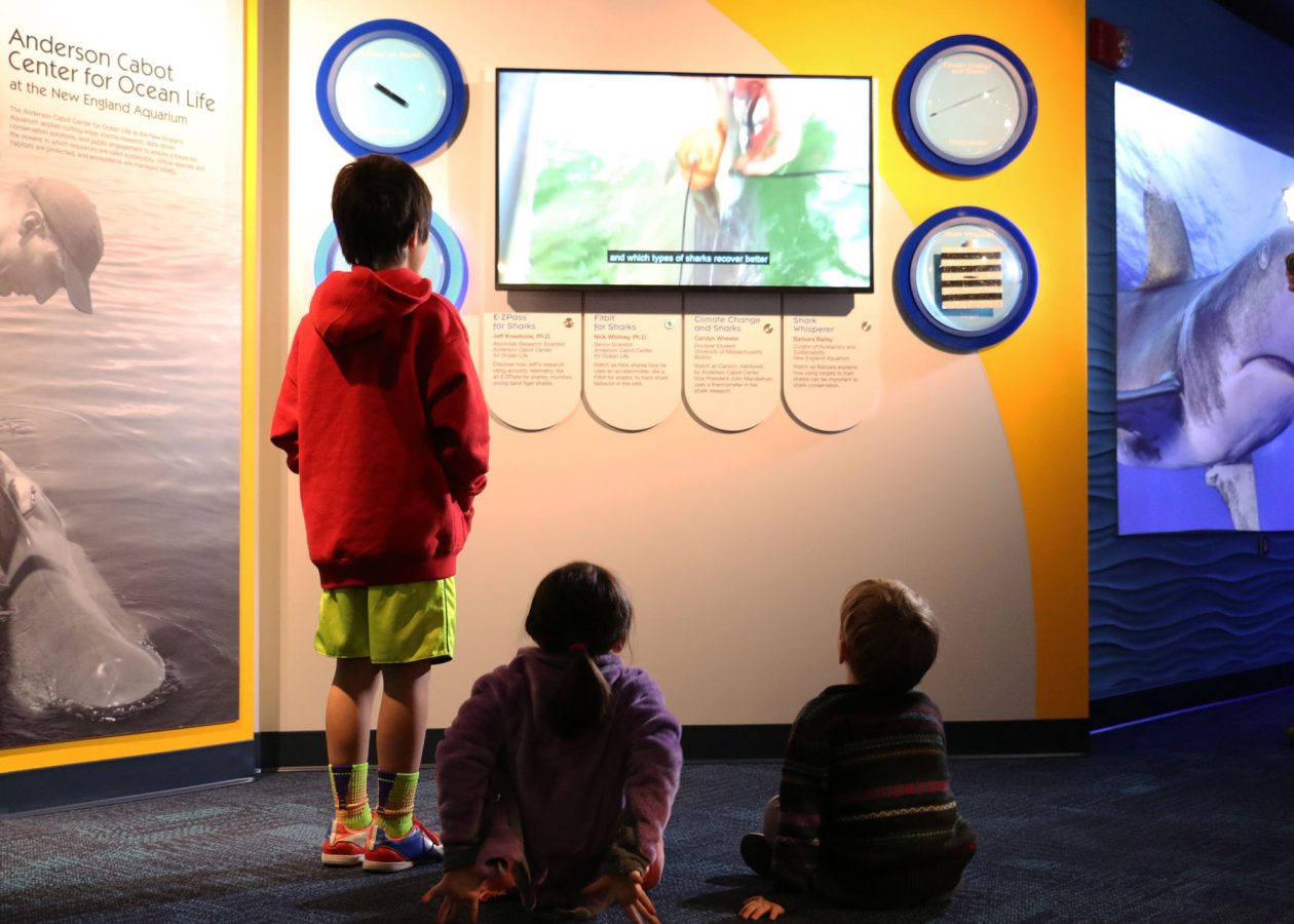 kids watch researcher videos in Science of Sharks exhibit