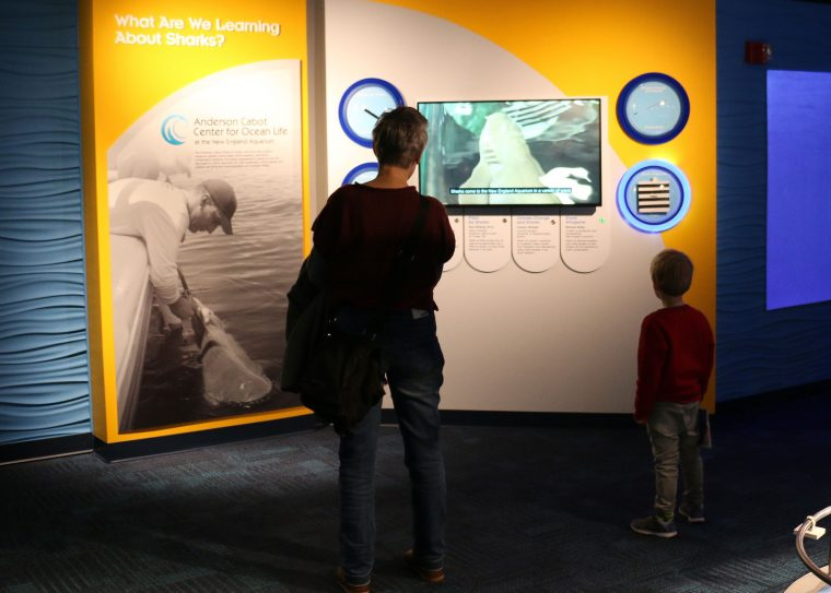 adult and child watch research videos in Science of Sharks exhibit