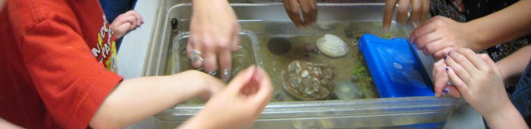 kids hands in a tidepool touch tank