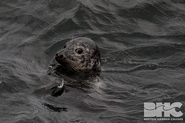seal looking at boat