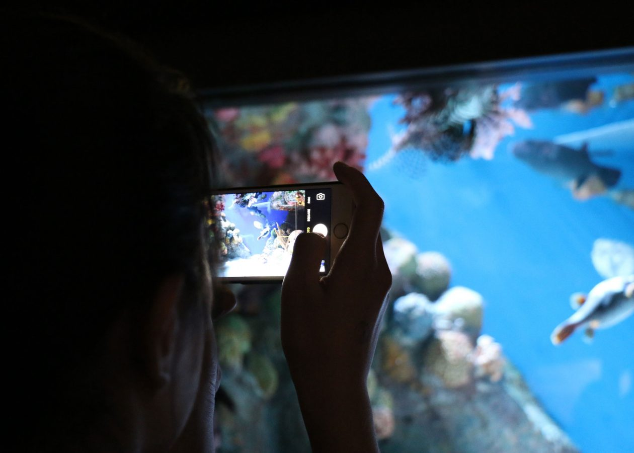 visitor takes picture of scorpionfish