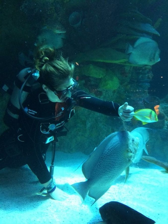 diver in the Giant Ocean Tank