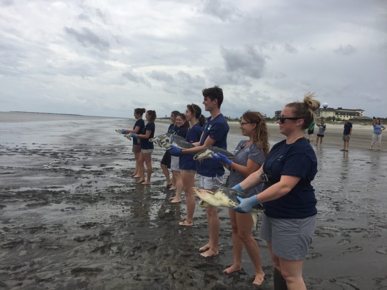 holding sea turtles before release
