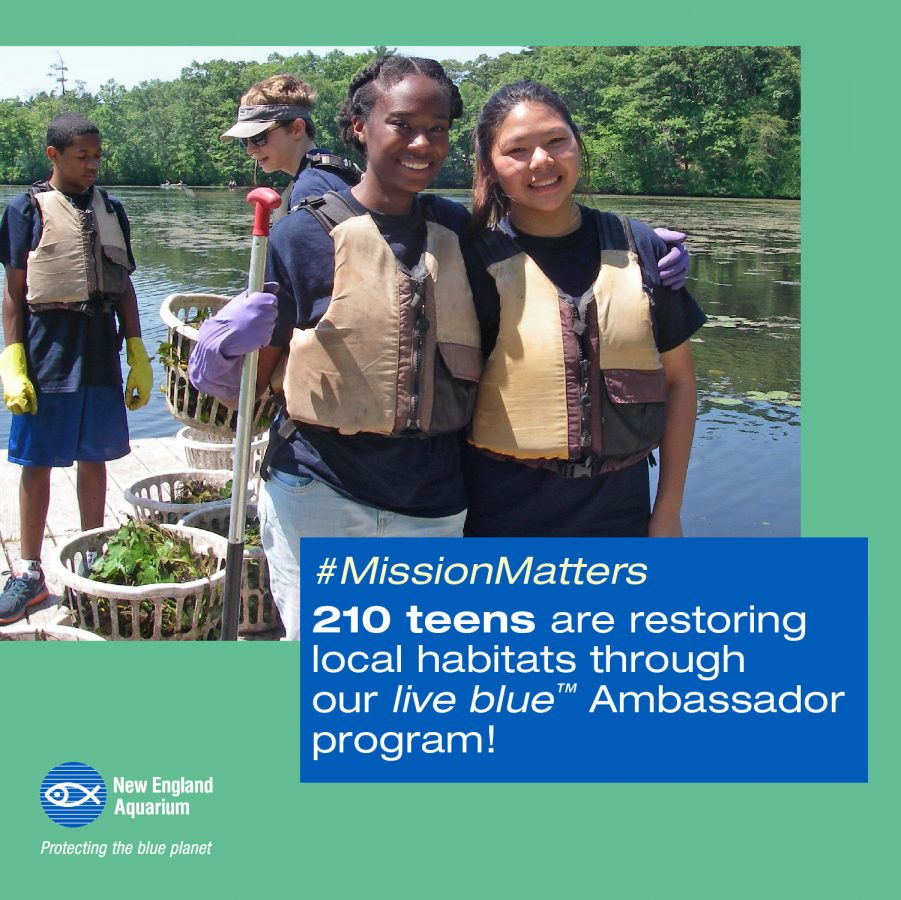 infographic: 210 teens are restoring local habitats through our live blue ambassador program