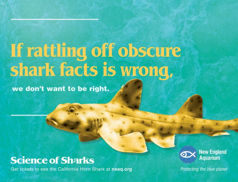 Science of Sharks 2-Sheets