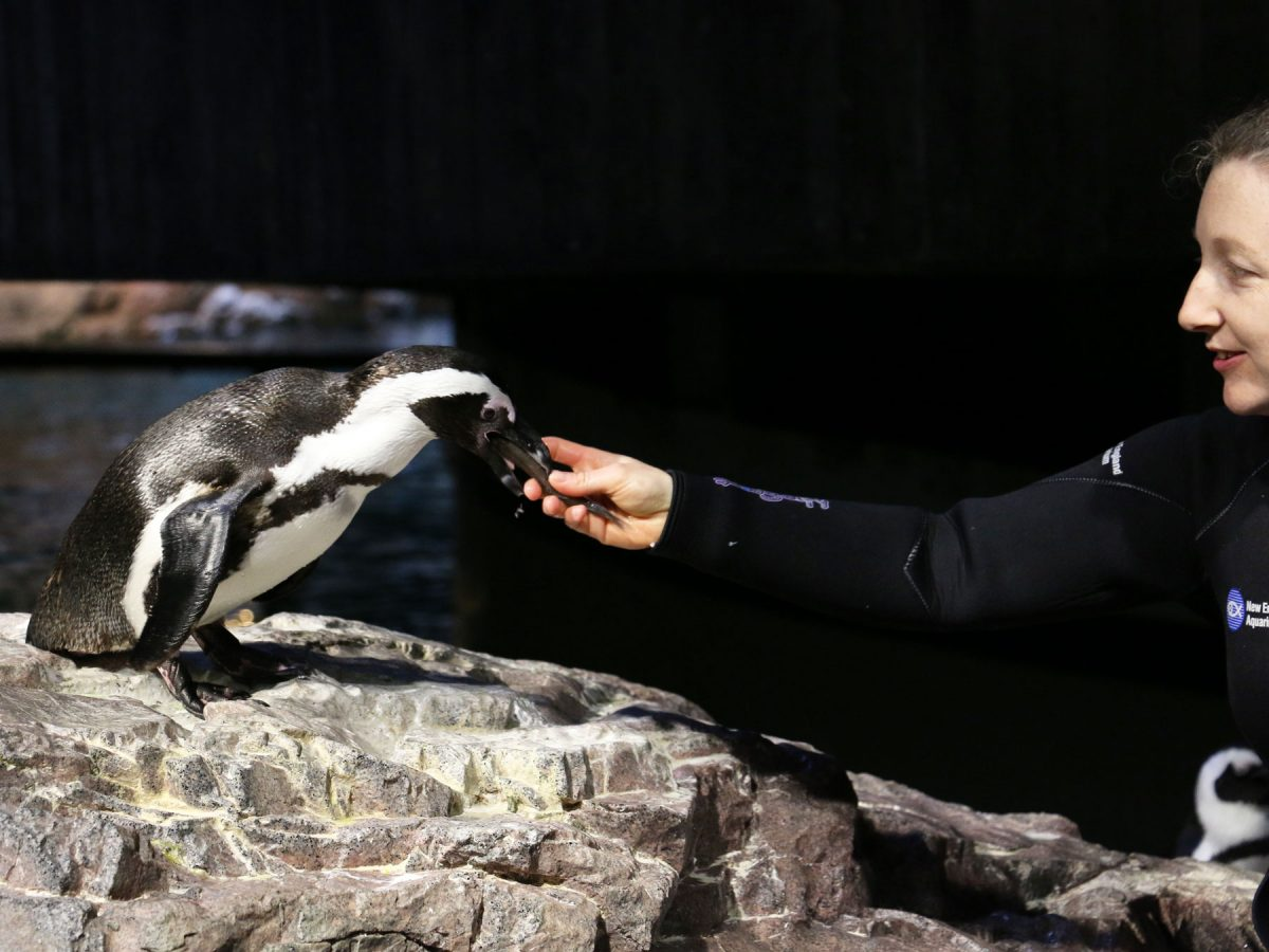 caitlin feeds penguin