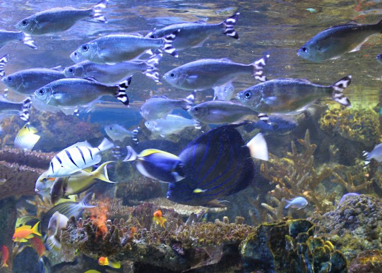 fish in pacific reef community