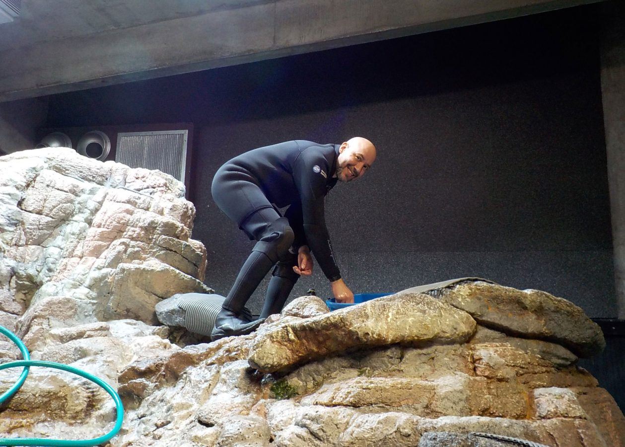 penguin volunteer scrubbing rock