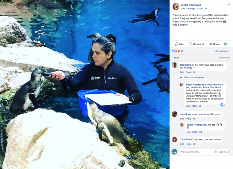 FB thumbnail of penguin feeding