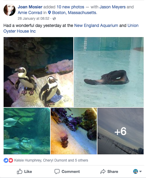 collage of aquarium animals