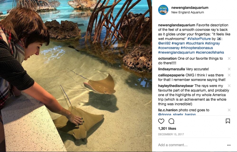 instagram touching stingray