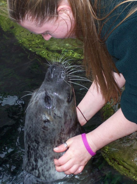 harbor seal looks up at trainer