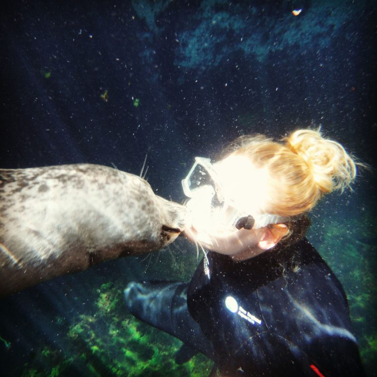 harbor seal gives trainer a smooch underwater