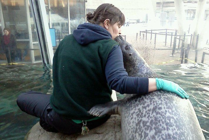 trainer and harbor seal nose to nose