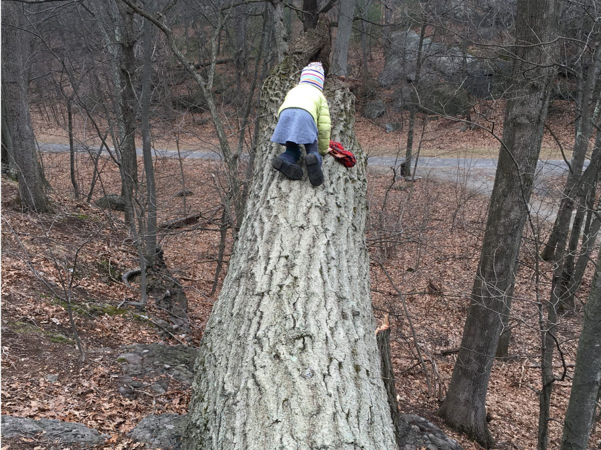 kid examines fallen tree