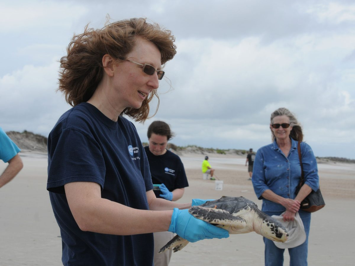 rescuer holds kemps ridley turtle