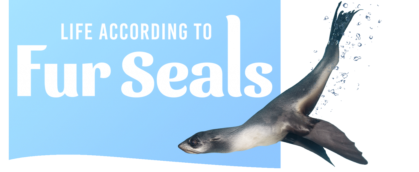 fur seal with logo