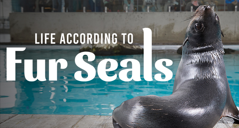 life according to fur seals