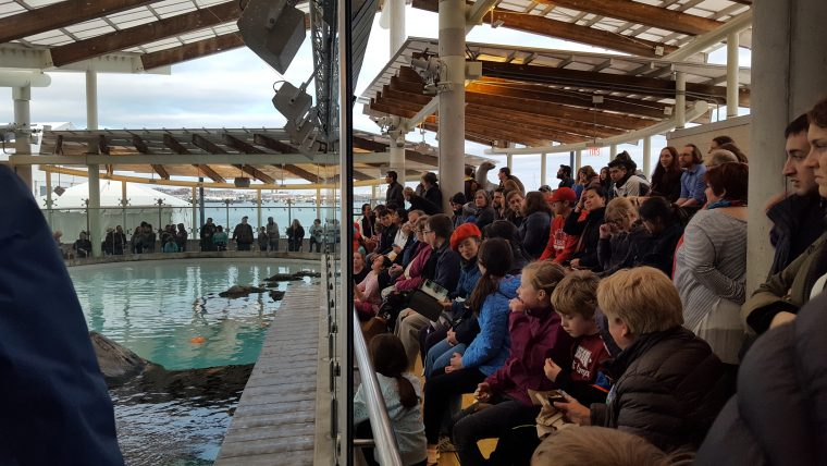 Aquarium members crowd around the New Balance Foundation Mammal Center to see the northern fur seals.