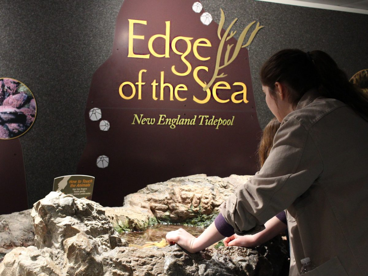 edge of the sea exhibit