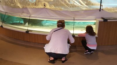 a pair of visitors watch the sharks and rays in the touch tank