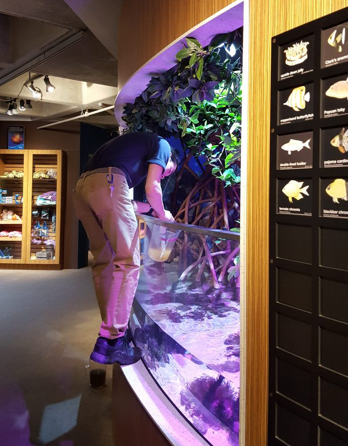 a staff member works on an exhibit