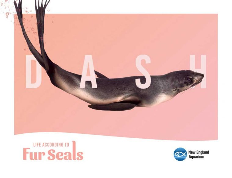 Life According to Fur Seals--Dash