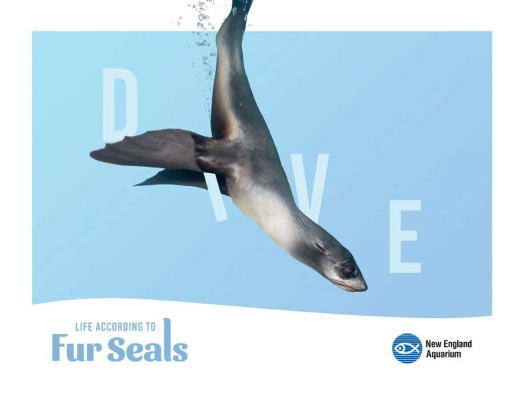 Life According to Fur Seals--Dive