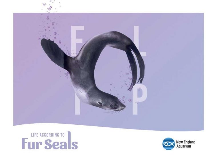 Life According to Fur Seals--Flip