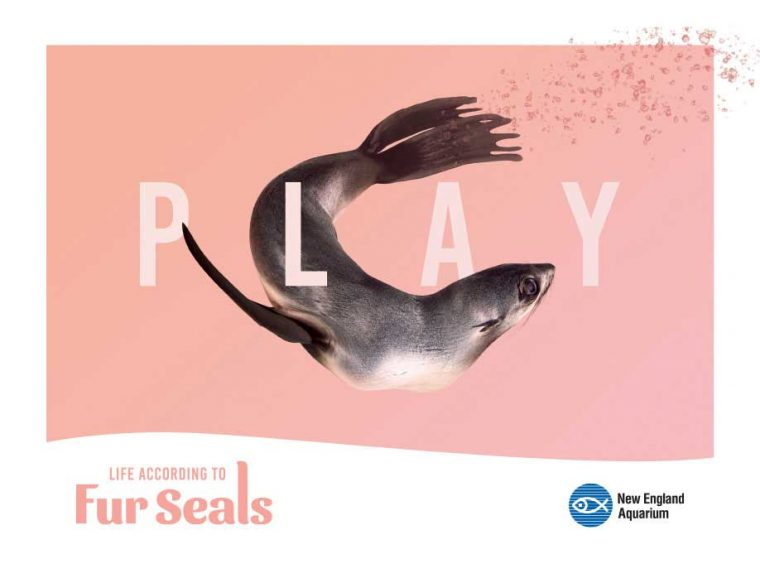 Life According to Fur Seals--Play
