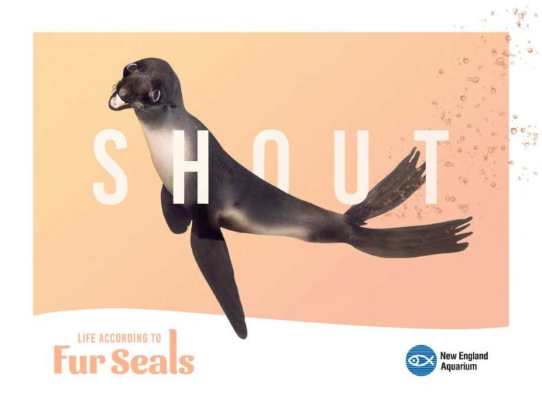 Life According to Fur Seals--Shout