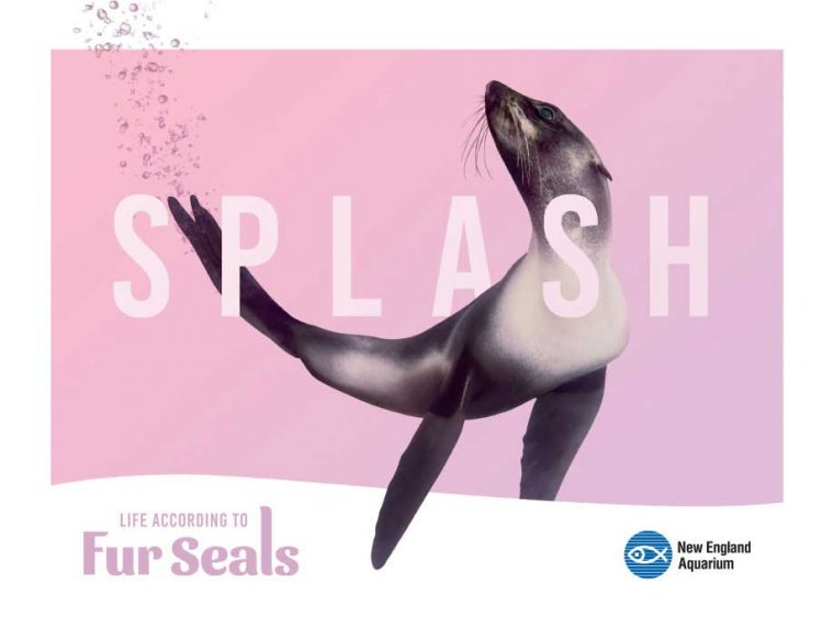 Life According to Fur Seals--Splash