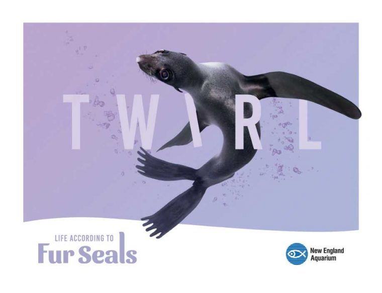 Life According to Fur Seals--Twirl