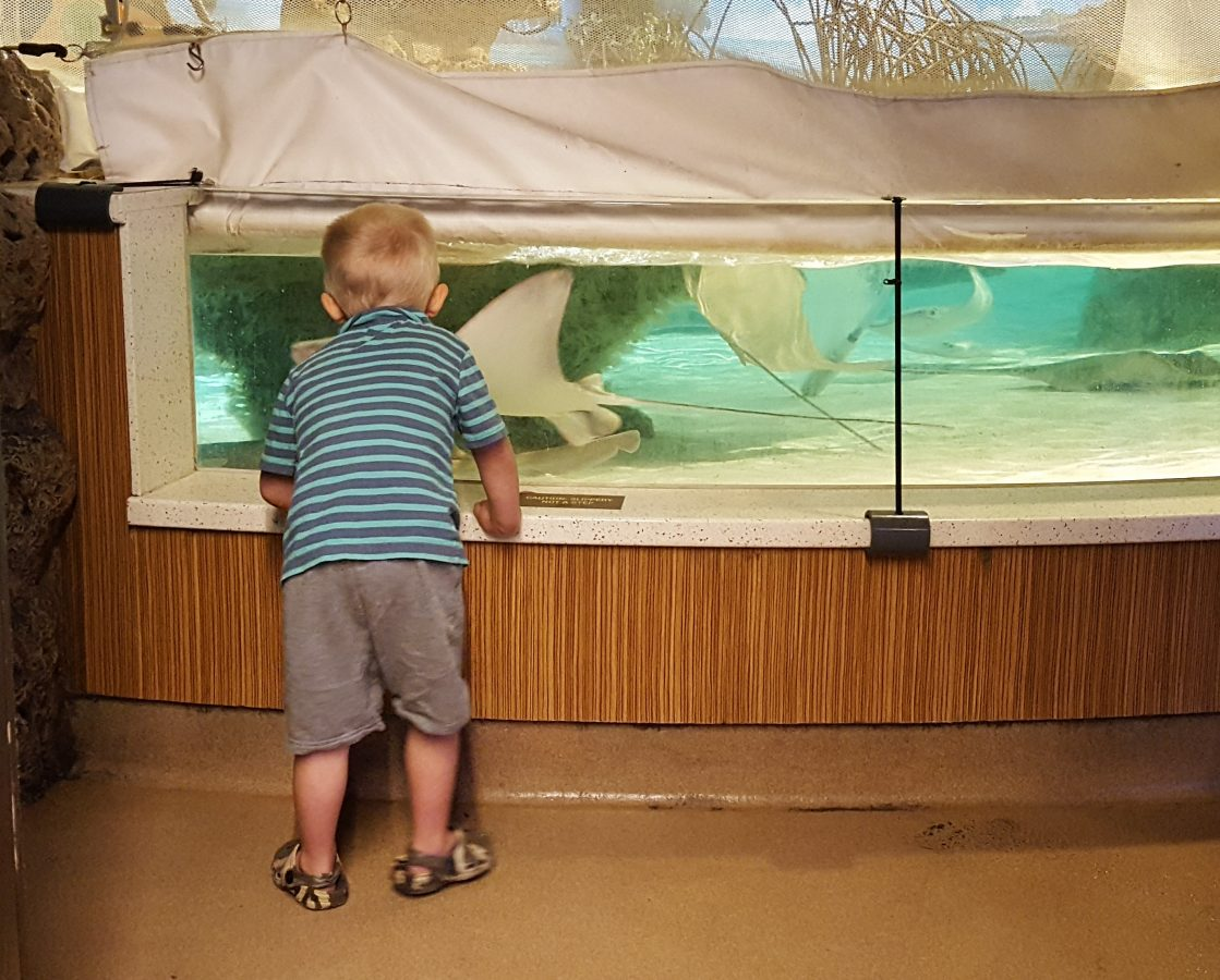 A visitor watches sharks and rays in the New Balance Foundation Shark and Ray Touch Tank.