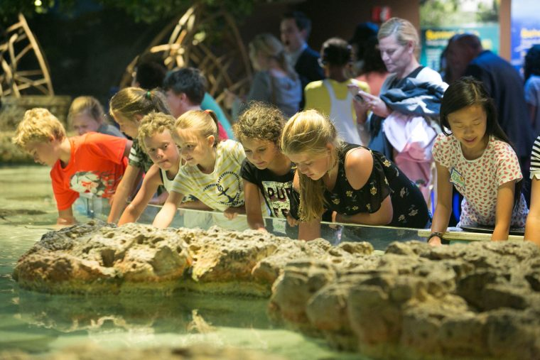 children enjoying shark and ray touch tank