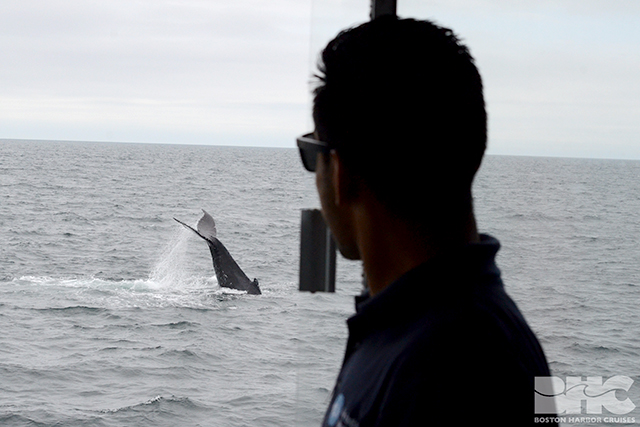 BHC staff looking at whale