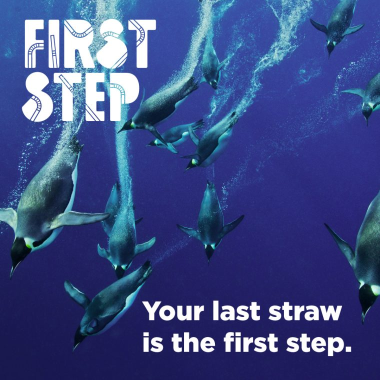 first step logo and penguins diving