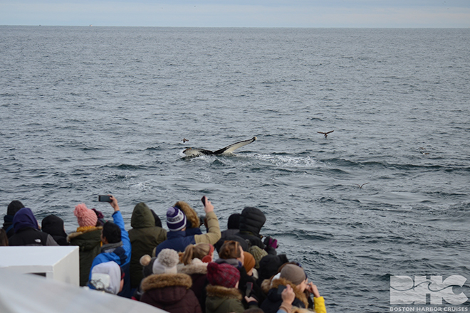 passengers looking at whales
