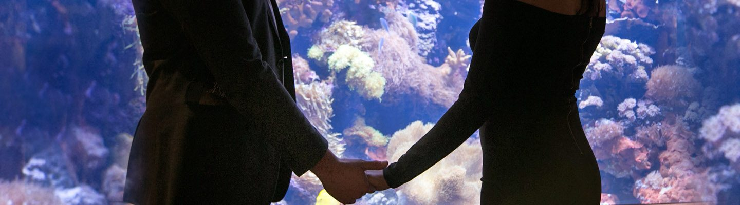 a couple holds hands in front of an exhibit